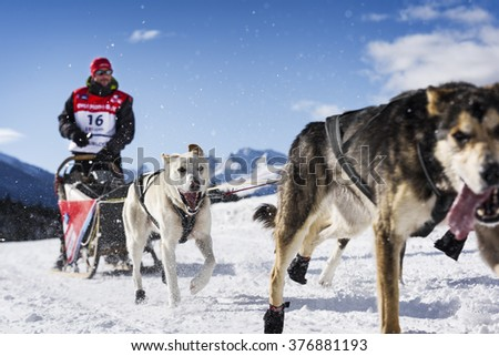 SARDIERES VANOISE, FRANCE - JANUARY 20 2016 - the GRANDE ODYSSEE the hardest mushers race in savoie Mont-Blanc, Benoit Verin, french musher, Vanoise, Alps