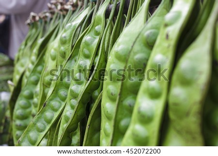 Sato is a plant used as food ingredients southern Thailand has a very pungent smell