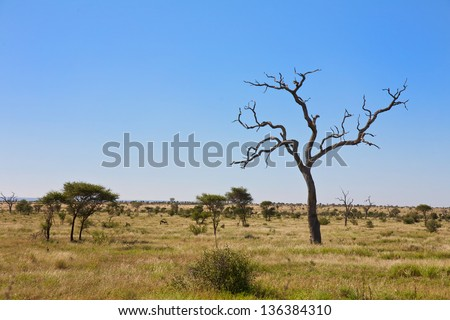 Savanna, bush veld scene in South Africa - stock photo