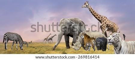 Savanna  wild animals collage - stock photo