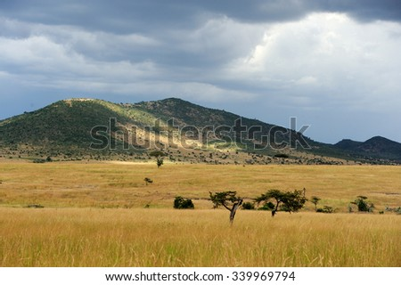 Savannah landscape in the National park of Kenya, Africa - stock photo
