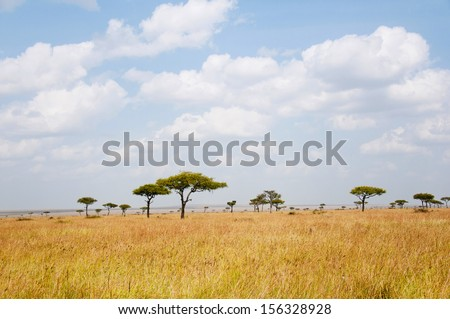 savannah landscape with flat topped acacias in the national park masai mara in kenya - stock photo
