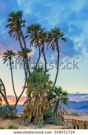 Savannah valley of Arava desert with doum palms (Hyphaene thebaica) near the border between Jordan and Israel - stock photo