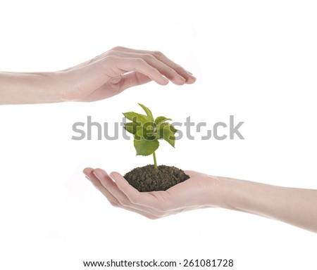 save plant - stock photo