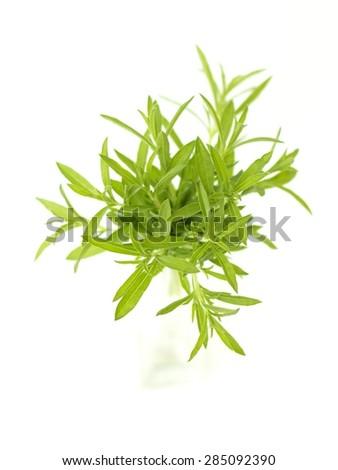 savory - stock photo