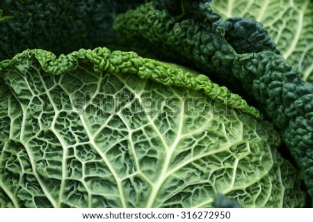 Savoy cabbage. Textured leaf. Natural green background. - stock photo