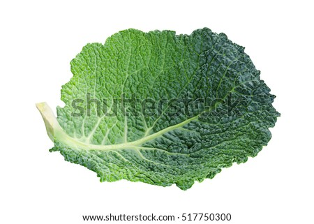 Savoy cabbage vegetable leaf isolated on white background