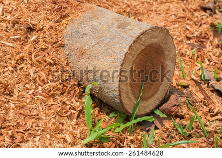 Sawdust from timber on the grass