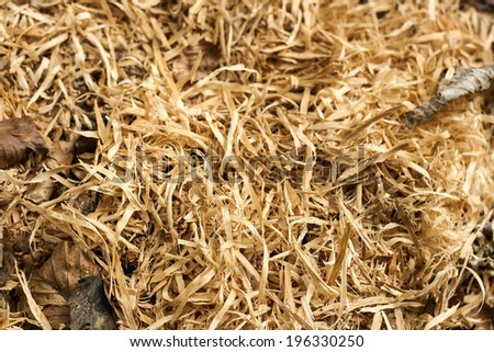 sawdust in the wood - stock photo