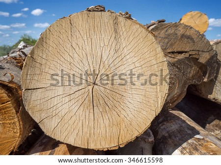 Sawed off tree trunk with cracked texture on a woodpile outdoors in front of blue sky  - stock photo