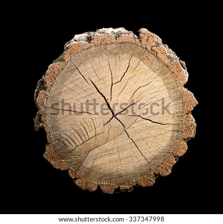 Sawn log. The texture of the tree. - stock photo