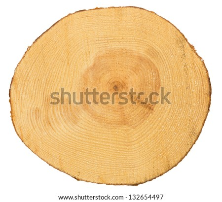 Sawn pine wood isolated on white background