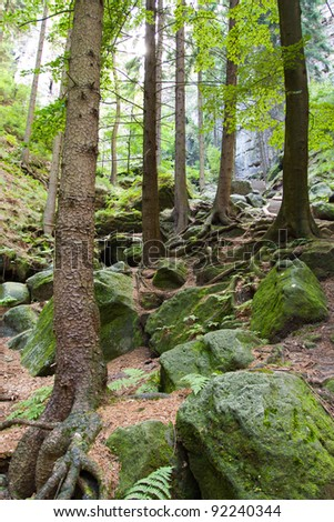 Saxony park in Germany with stones