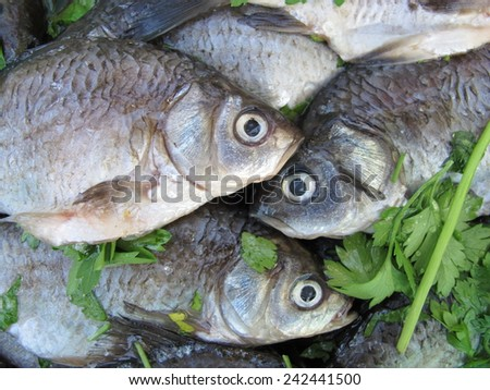 Scaled European carps with greenery - stock photo