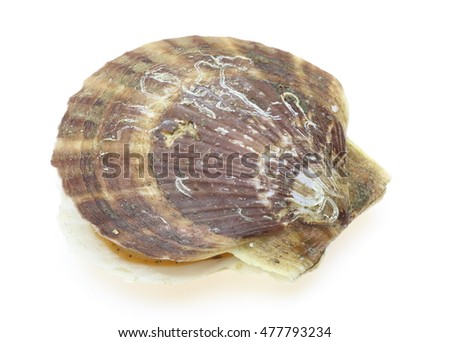 Scallop in a white background