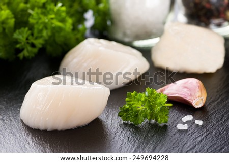 Scallop on black stone plate - stock photo