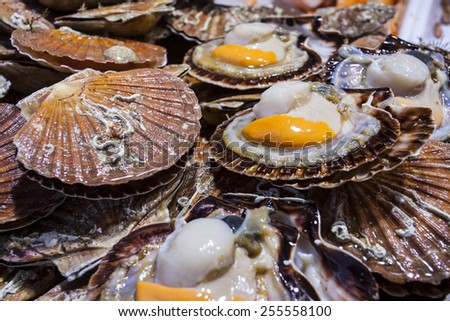 Scallop / Seafood for sale at the market in France - stock photo