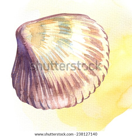 Scallop seashell isolated