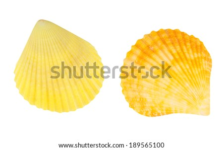 Scallop seashell isolated with path - stock photo