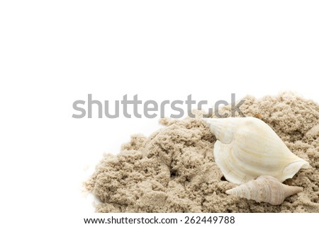 Scallop shell isolated on the white background.