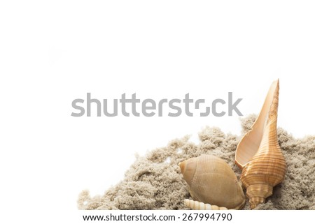 Scallop shell isolated on the white background. - stock photo