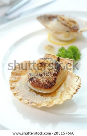 scallops - stock photo