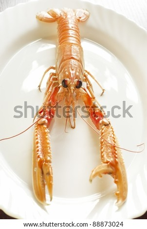 Scampi - stock photo