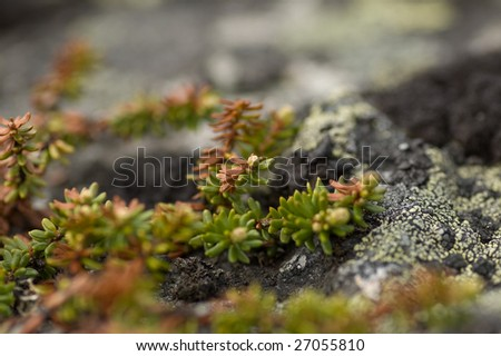 scant greenary of the north nature - stock photo