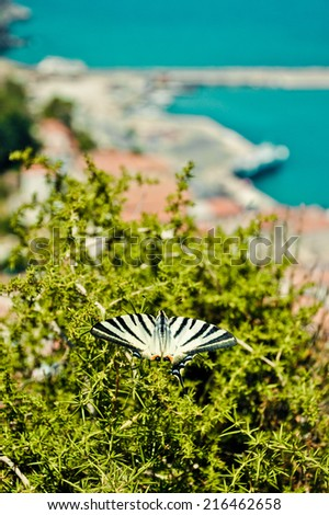 Scarce Swallowtail (Iphiclides podalirius) and Karlovasi port on background,  Samos island, Greece. - stock photo