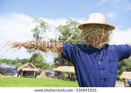 scarecrow in green rice fields, farmer