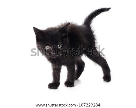 Scared black kitten isolated on white background - stock photo