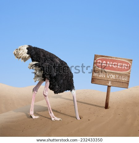 scared ostrich burying head in sand near standing high voltage wooden signboard - stock photo