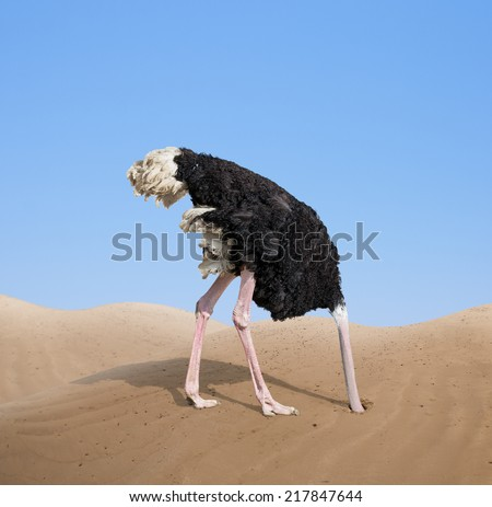 scared ostrich burying its head in sand concept - stock photo