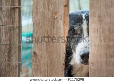 Scared stray dog behind the corral of a dog refuge