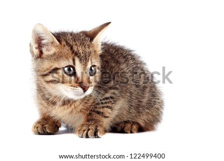 Scared striped kitten on a white background - stock photo
