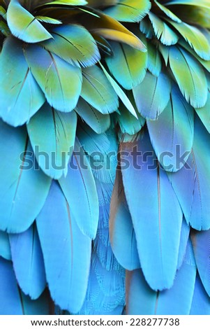 Scarlet Macaw feathers background texture - stock photo