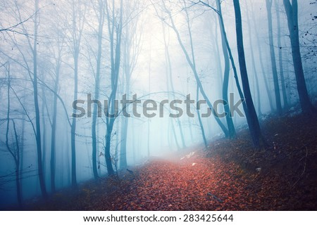 Scary blue foggy light seasonal forest scene with orange red colored foggy path. - stock photo
