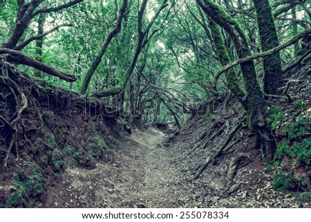 Scary forest - stock photo