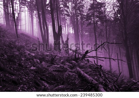 Scary forest, foggy wood - stock photo