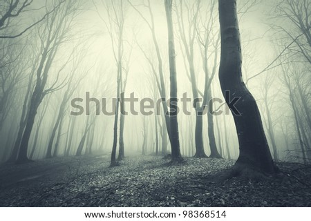scary forest with black trees - stock photo