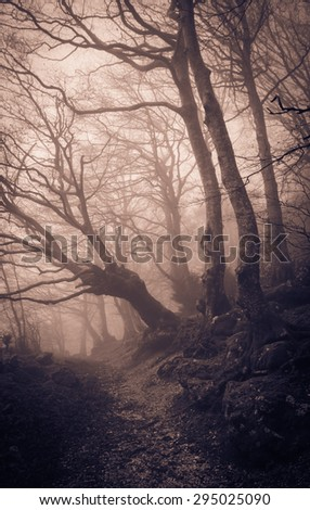 Scary mountain forest in dense fog. Photo of Monte Cucco mountain in Umbria. - stock photo