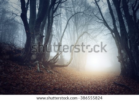 Scary mysterious forest in fog in autumn. Magic trees. Nature misty landscape - stock photo