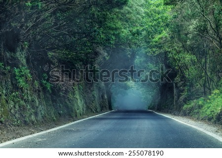 Scary road - stock photo