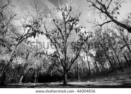 Scary Tree - stock photo