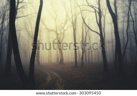 scary twisted trees in forest at sunset - stock photo