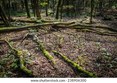 Scattered tree branches in a forest - stock photo