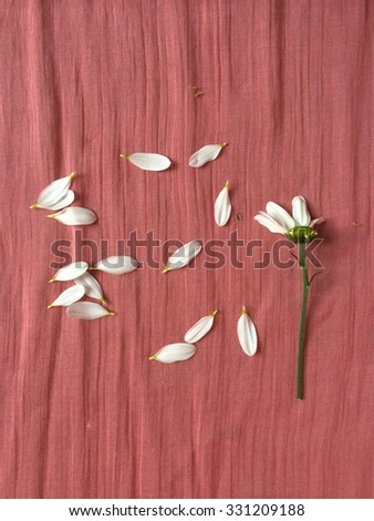 Scattered white flower petals on wrinkled pink fabric - stock photo