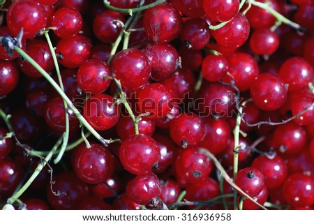 scattering of red currants