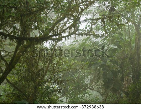 Scene from a lush, dense, tropical rain forest in Costa Rica - stock photo