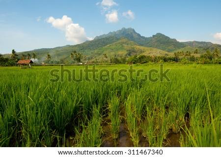 Scene in East Java, Indonesia - stock photo